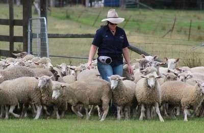 Tobruk Sheep Station Tours by Runaway Tours