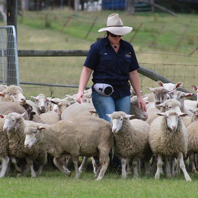 Tobruk Sheep Station Tours by Runaway Tours