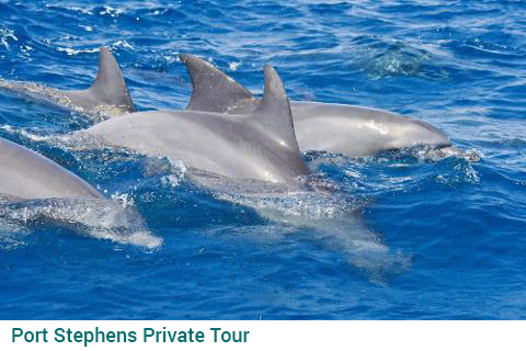 Port Stephens Private Tour